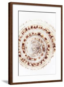 So Pure Collection - Sundial Shell IV by Philippe Hugonnard