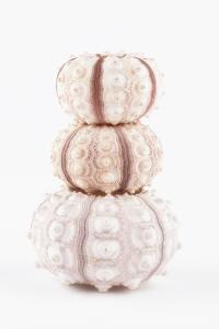 So Pure Collection - Tree White Sea Urchin shells by Philippe Hugonnard