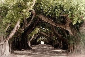 The Beautiful Banyan Tree by Philippe Hugonnard