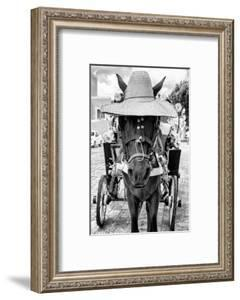 ¡Viva Mexico! B&W Collection - Horse with a straw Hat II by Philippe Hugonnard