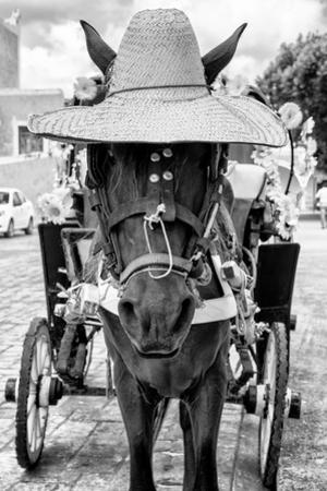 ¡Viva Mexico! B&W Collection - Horse with a straw Hat II