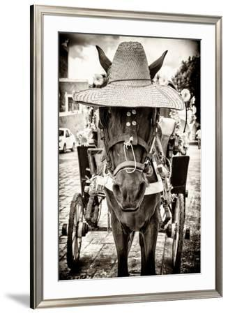 ¡Viva Mexico! B&W Collection - Horse with a straw Hat by Philippe Hugonnard