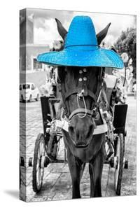 ¡Viva Mexico! B&W Collection - Horse with Blue straw Hat by Philippe Hugonnard