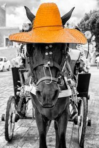 ¡Viva Mexico! B&W Collection - Horse with Light Orange straw Hat by Philippe Hugonnard