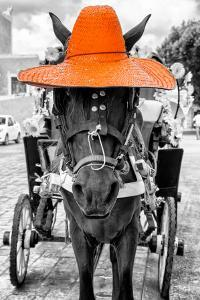 ¡Viva Mexico! B&W Collection - Horse with Orange straw Hat by Philippe Hugonnard
