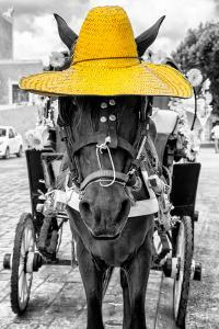 ¡Viva Mexico! B&W Collection - Horse with Yellow straw Hat by Philippe Hugonnard