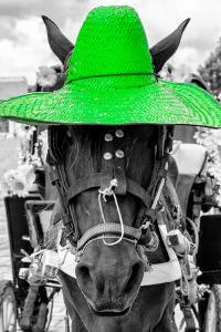 ¡Viva Mexico! B&W Collection - Portrait of Horse with Green Hat by Philippe Hugonnard