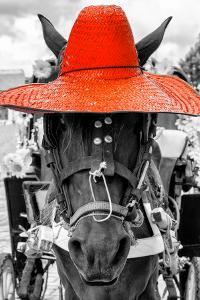 ¡Viva Mexico! B&W Collection - Portrait of Horse with Red Hat by Philippe Hugonnard