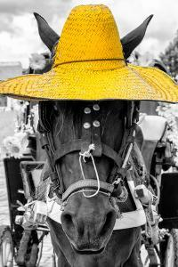 ¡Viva Mexico! B&W Collection - Portrait of Horse with Yellow Hat by Philippe Hugonnard