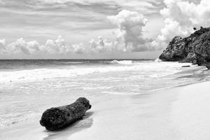 ?Viva Mexico! B&W Collection - Tree Trunk on a Caribbean Beach II by Philippe Hugonnard