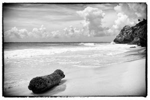 ¡Viva Mexico! B&W Collection - Tree Trunk on a Caribbean Beach by Philippe Hugonnard