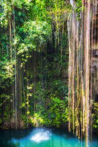 ¡Viva Mexico! Collection - Hanging Roots of Ik-Kil Cenote by Philippe Hugonnard