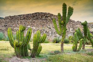 ¡Viva Mexico! Collection - Saguaro Cactus and Mexican Ruins at Sunset by Philippe Hugonnard