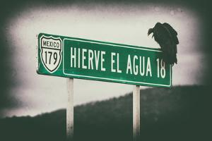 ¡Viva Mexico! Collection - Vulture II by Philippe Hugonnard