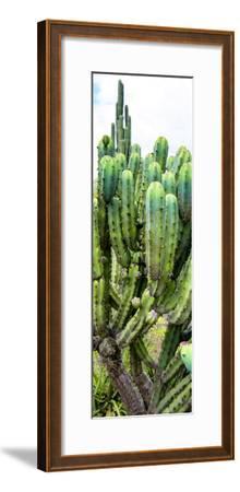 ¡Viva Mexico! Panoramic Collection - Cactus II