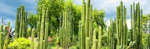 ¡Viva Mexico! Panoramic Collection - Cardon Cactus by Philippe Hugonnard