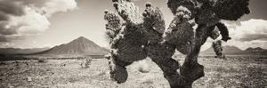 ¡Viva Mexico! Panoramic Collection - Desert Cactus I by Philippe Hugonnard