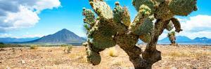 ¡Viva Mexico! Panoramic Collection - Desert Cactus II by Philippe Hugonnard