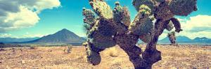 ¡Viva Mexico! Panoramic Collection - Desert Cactus IV by Philippe Hugonnard