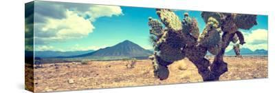 ¡Viva Mexico! Panoramic Collection - Desert Cactus IV