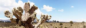 ¡Viva Mexico! Panoramic Collection - Desert Cactus VIII by Philippe Hugonnard