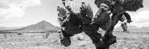 ¡Viva Mexico! Panoramic Collection - Desert Cactus by Philippe Hugonnard