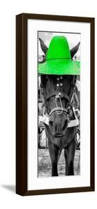 ¡Viva Mexico! Panoramic Collection - Horse with a Green straw Hat by Philippe Hugonnard
