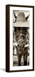 ¡Viva Mexico! Panoramic Collection - Horse with a straw Hat by Philippe Hugonnard