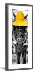 ¡Viva Mexico! Panoramic Collection - Horse with a Yellow straw Hat by Philippe Hugonnard