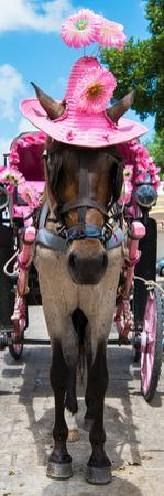 ¡Viva Mexico! Panoramic Collection - Horse with Pink Hat II by Philippe Hugonnard