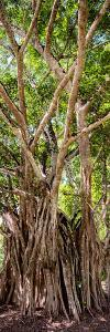 ?Viva Mexico! Panoramic Collection - Jungle Trees by Philippe Hugonnard