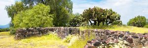 ¡Viva Mexico! Panoramic Collection - Mexican Vegetation by Philippe Hugonnard