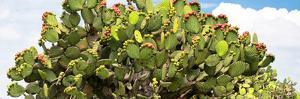 ¡Viva Mexico! Panoramic Collection - Prickly Pear Cactus II by Philippe Hugonnard