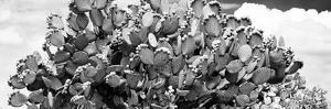 ¡Viva Mexico! Panoramic Collection - Prickly Pear Cactus III by Philippe Hugonnard