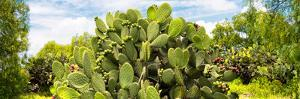 ¡Viva Mexico! Panoramic Collection - Prickly Pear Cactus IV by Philippe Hugonnard