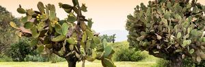 ¡Viva Mexico! Panoramic Collection - Prickly Pear Cactus by Philippe Hugonnard