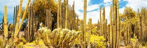 ¡Viva Mexico! Panoramic Collection - Yellow Cardon Cactus II by Philippe Hugonnard