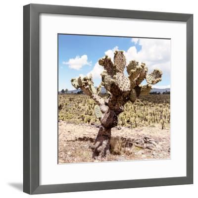 ¡Viva Mexico! Square Collection - Cactus Desert IV