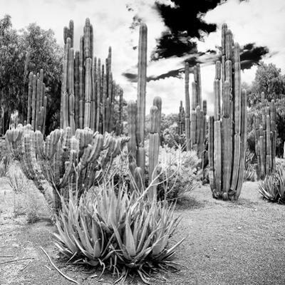 ¡Viva Mexico! Square Collection - Cardon Cactus B&W IV by Philippe Hugonnard
