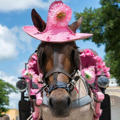 ¡Viva Mexico! Square Collection - Horse with a Pink Hat by Philippe Hugonnard