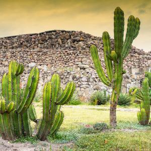 ¡Viva Mexico! Square Collection - Mexican Cactus at Sunset by Philippe Hugonnard