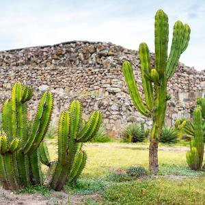 ¡Viva Mexico! Square Collection - Mexican Cactus II by Philippe Hugonnard