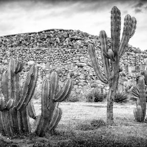 ¡Viva Mexico! Square Collection - Mexican Cactus III by Philippe Hugonnard