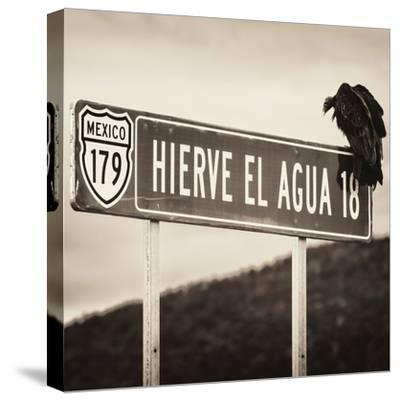¡Viva Mexico! Square Collection - Vulture II