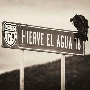 ¡Viva Mexico! Square Collection - Vulture II by Philippe Hugonnard