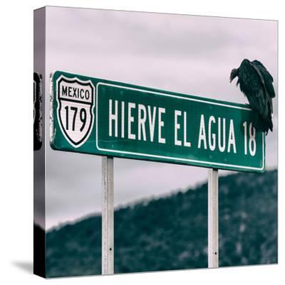 ¡Viva Mexico! Square Collection - Vulture