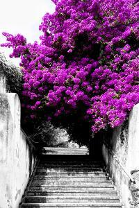 Welcome to Portugal Collection - Flowery Staircase II by Philippe Hugonnard