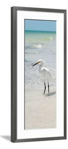 White Heron - Florida by Philippe Hugonnard