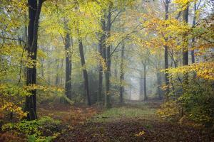 Autumn Way by Philippe Manguin