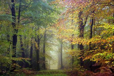 Brocéliande colored forest